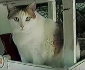Creme Puff is the longest living cat in the world, dying at 38 years and 2 days.