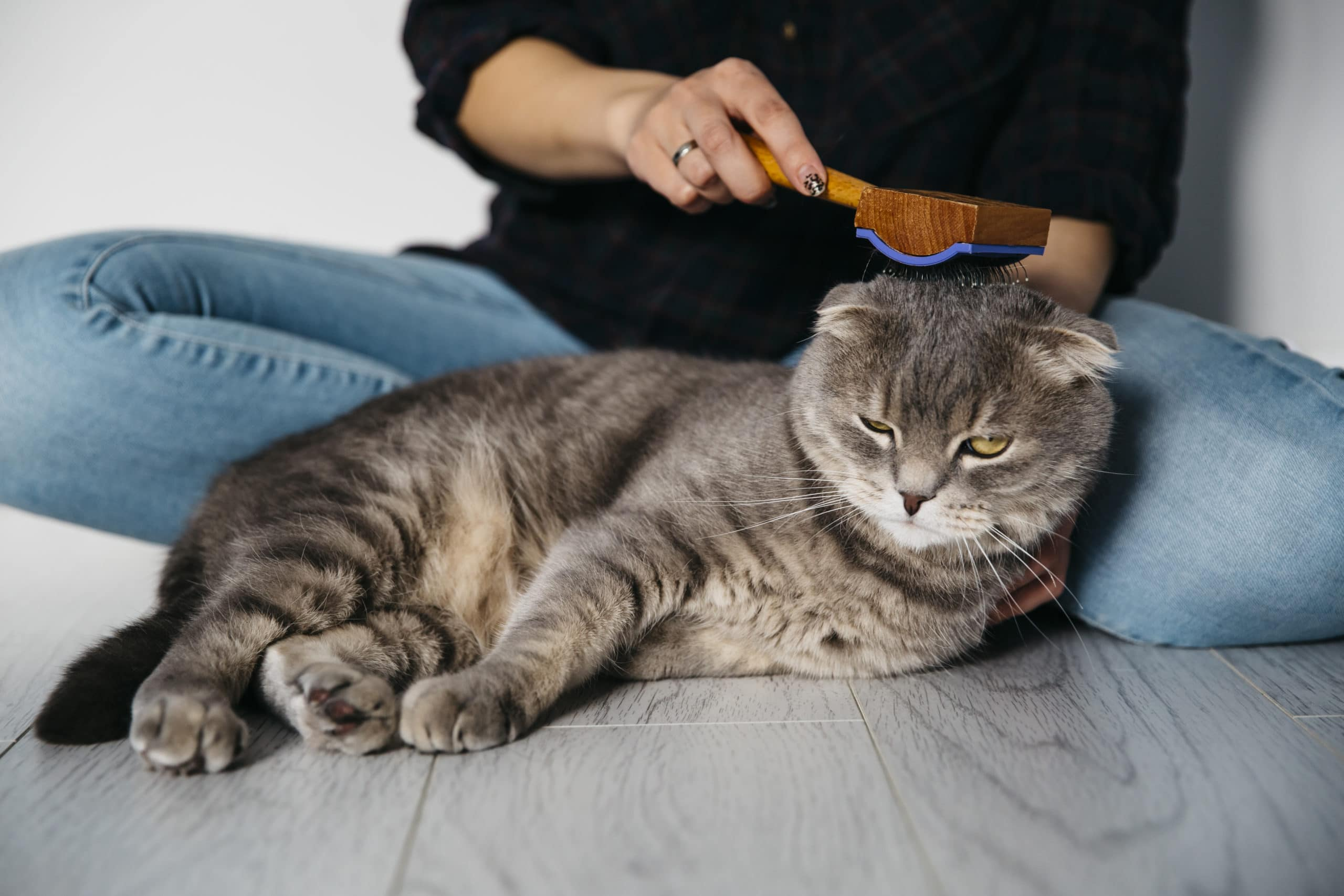 If you keep up on your cat's grooming, it might mean you don't have to give a senior cat a bath.